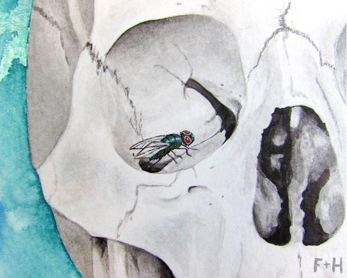 Watercolor Skull Painting - Fox + Hazel