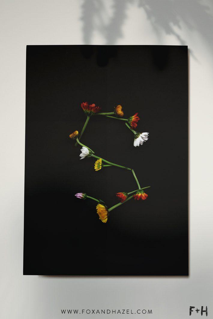 Free Modern Botanical Prints - Fox + Hazel 4